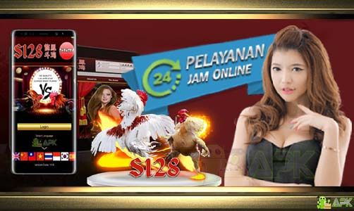 Agen S128 Sabung Ayam » Video Ayam Laga Bangkok Super